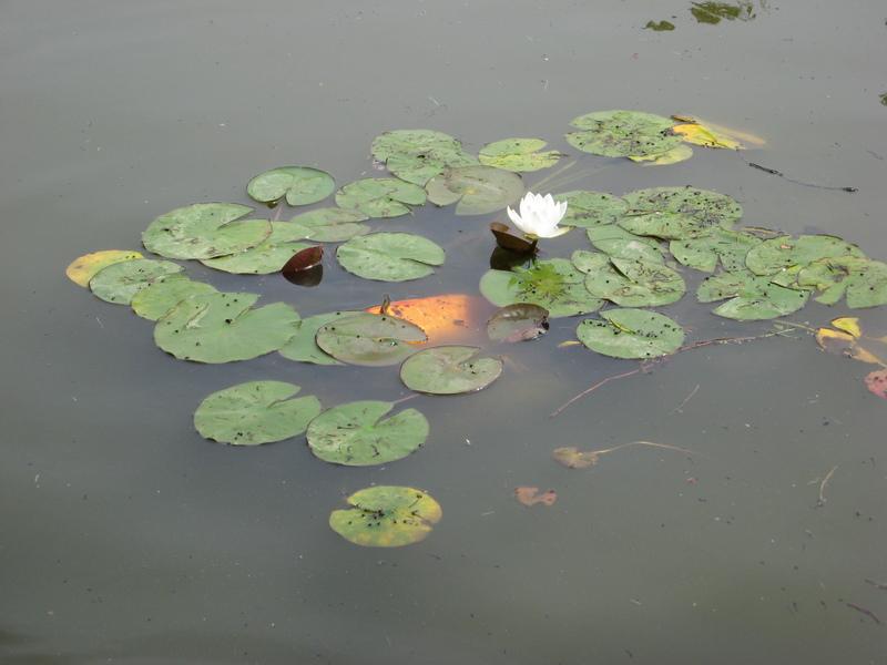 Parco Sigurtà (02/06/2008)